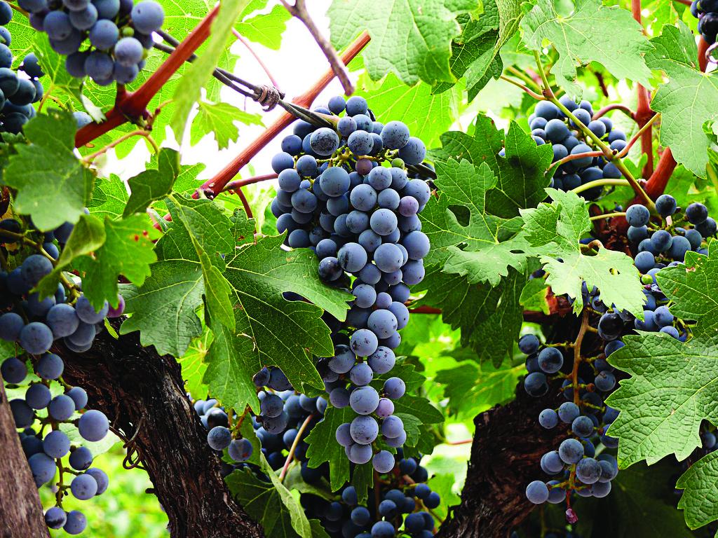 Al compás de la milonga y la seducción de los vinos argentinos