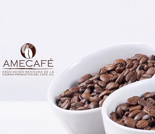 Ayuda para los productores de Café en Guerrero