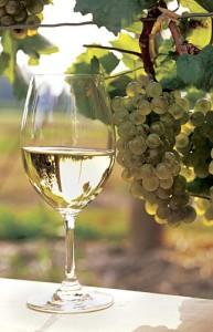 vino-argentino-torrontés