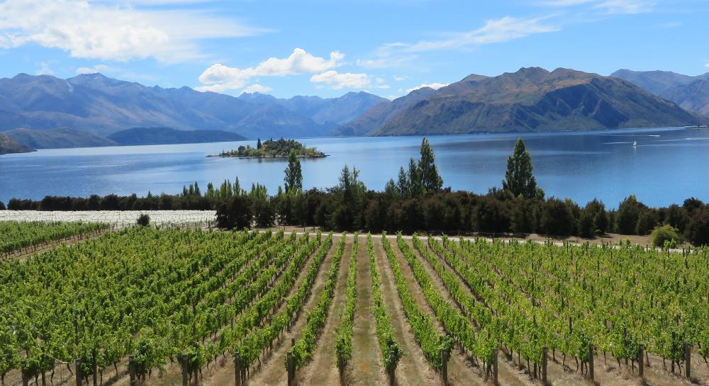 Nueva Zelanda, la próxima meca del vino