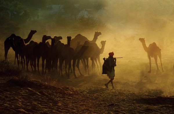 pushkar-camel-fair-2