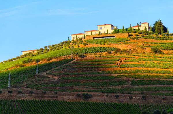 El-vinho-verde-la-frescura-de-portugal-El-Conocedor-6