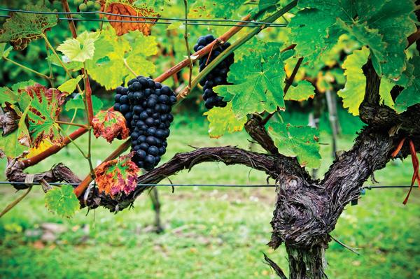 El-vinho-verde-la-frescura-de-portugañ-El-Conocedor-2
