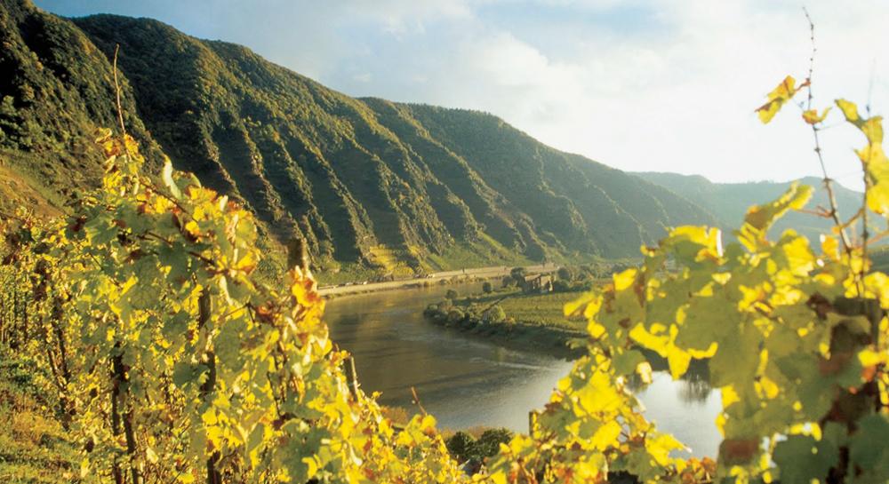 Alemania: más allá del muro, la fuerza de los vinos
