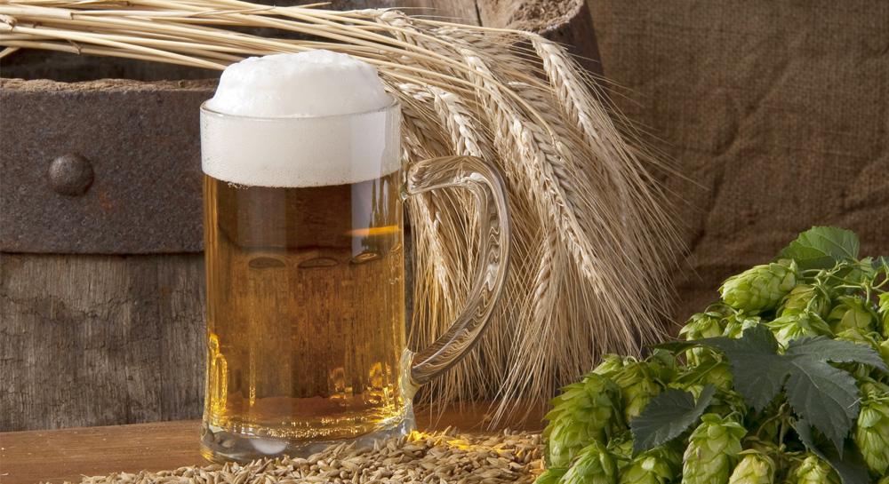 El grano milenario de la cerveza