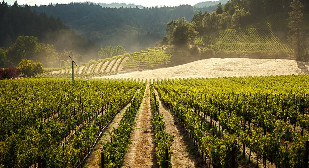 Beringer llega a México con selectos vinos de Napa