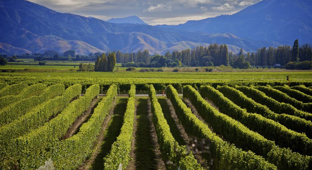 El paraíso del Pacífico: Nueva Zelanda