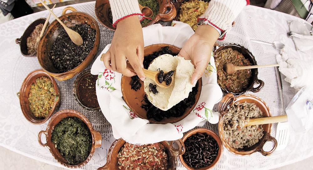 Gastrotransmutable: bichitos en la sopa