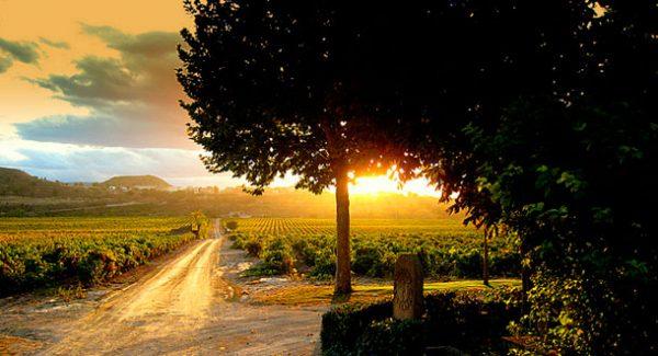 regiones-de-vinos-españa