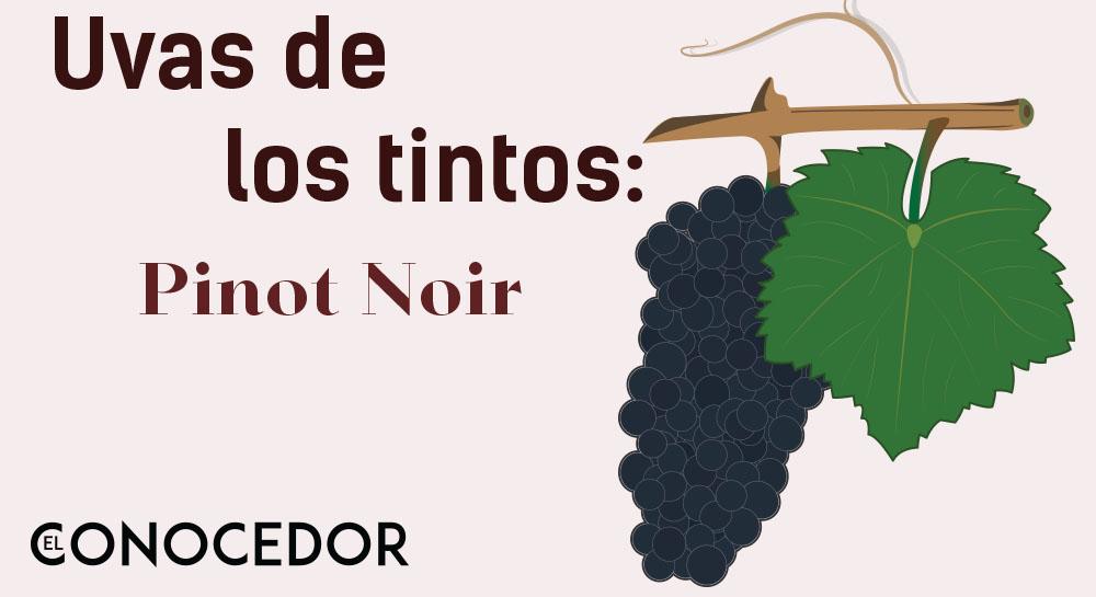 Las uvas de los vinos tintos: Pinot Noir