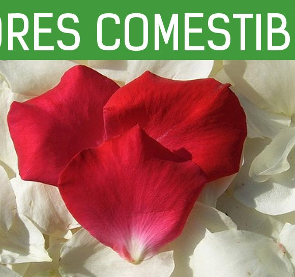 Flores comestibles