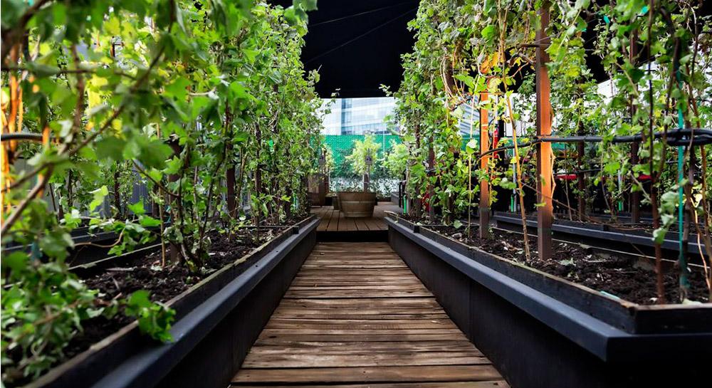 Vinícola Urbana: Un viñedo en la Ciudad de México