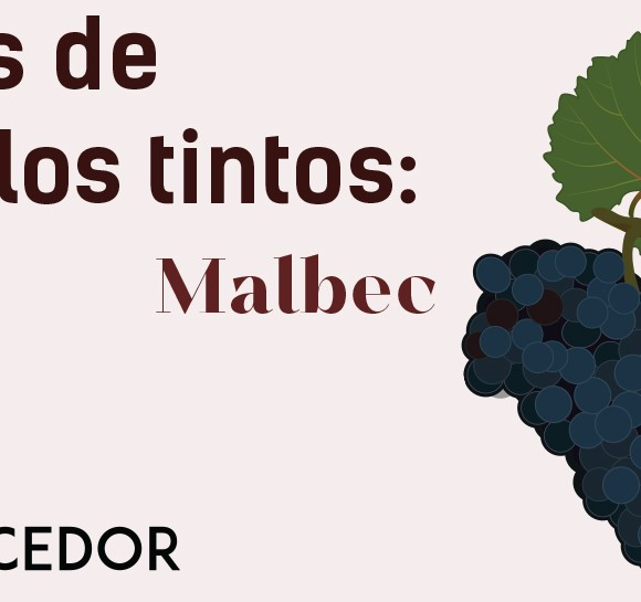 Las uvas de los vinos tintos: Malbec