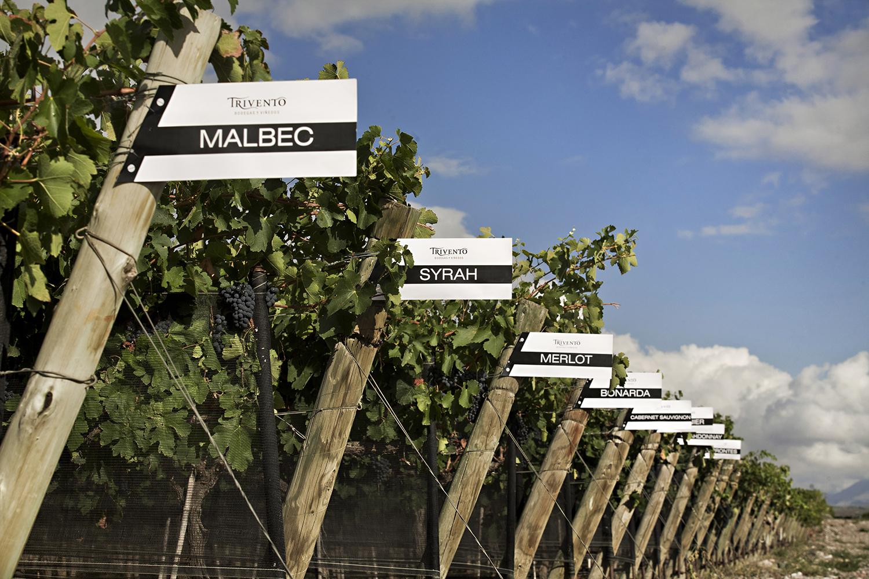 Cartel Malbec copy