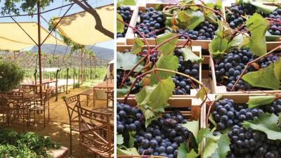 Vino mexicano: mucho más que el Valle de Guadalupe