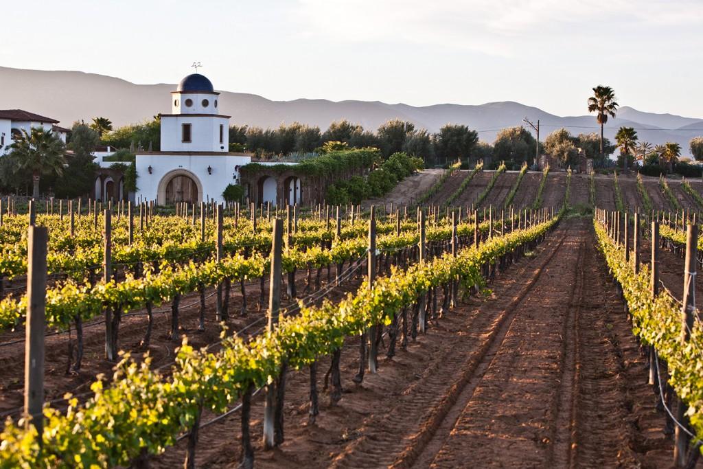 Las mejores opciones de vinos mexicanos