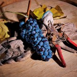 pizzini_nebbiolo_grapes