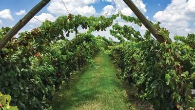 Guanajuato: cuna de vinos llenos de historia