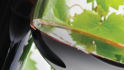 Lo tropical tiene sus encantos: vinos y viñedos venezolanos