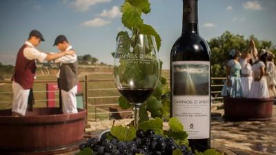 Caminos D´ Vinos, un vino de altura