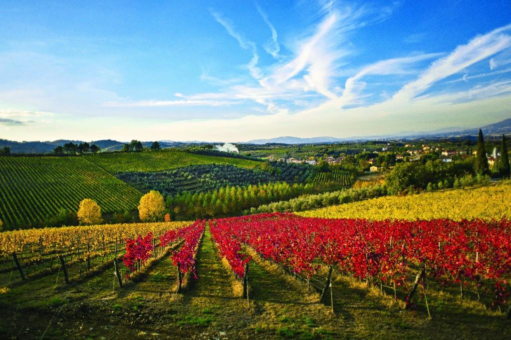 Toscana y sus inolvidables vinos