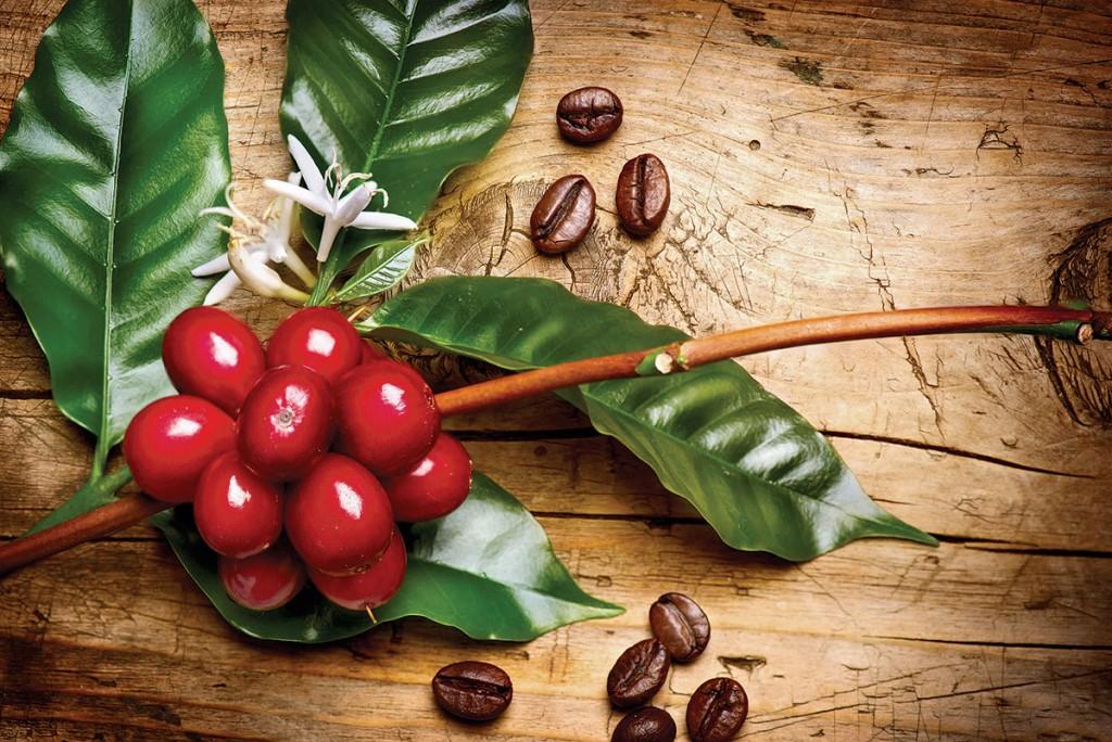 Las variedades de café en México