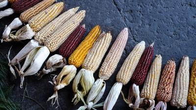 El 2do Encuentro de Cocineras Tradicionales de Oaxaca ya tiene fecha