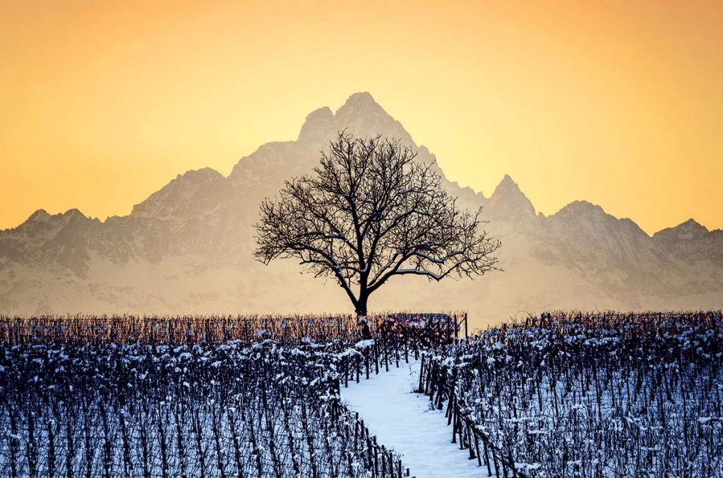 Sus Vinos: Piamonte