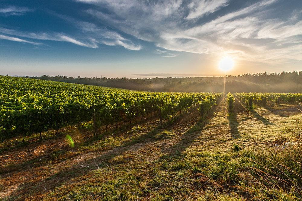 vinoblanco2