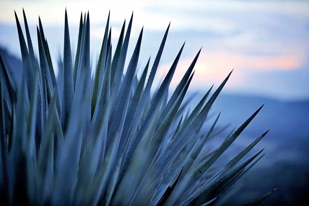 Colección patriota para amantes del tequila