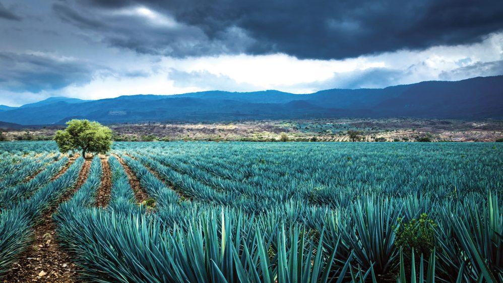 La ciencia del destilado de México