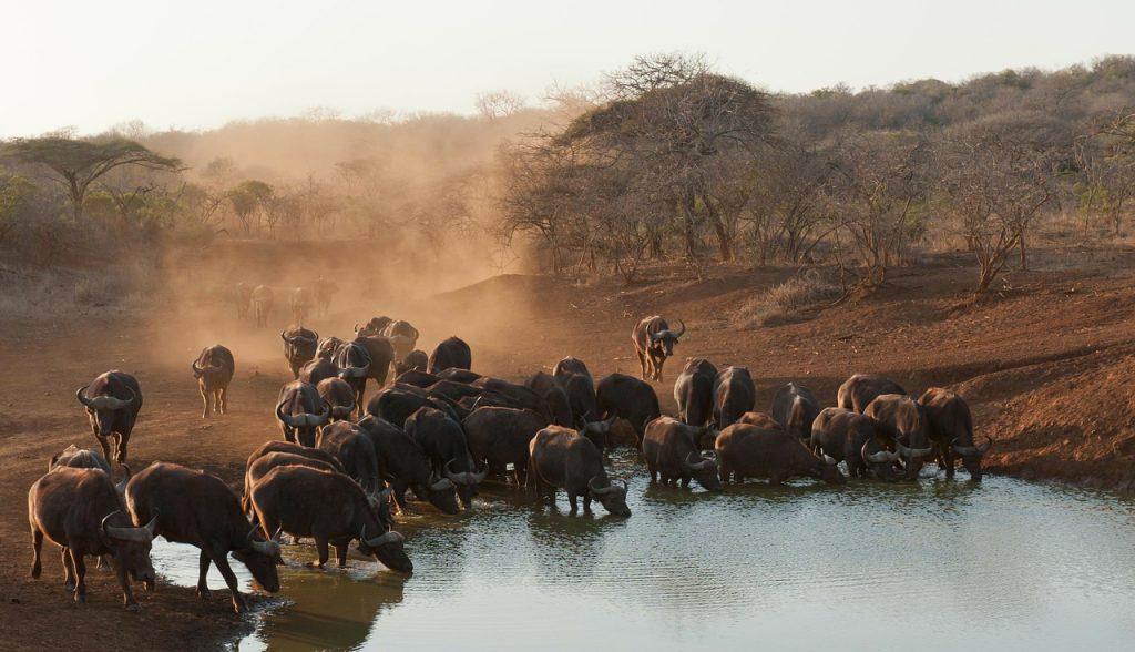Sudáfrica, raíces ancestrales con toques de modernidad