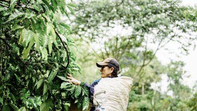 Pastora Caballero, mujer de café