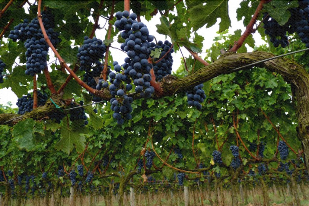 ¿Qué significa ser una State Winery?