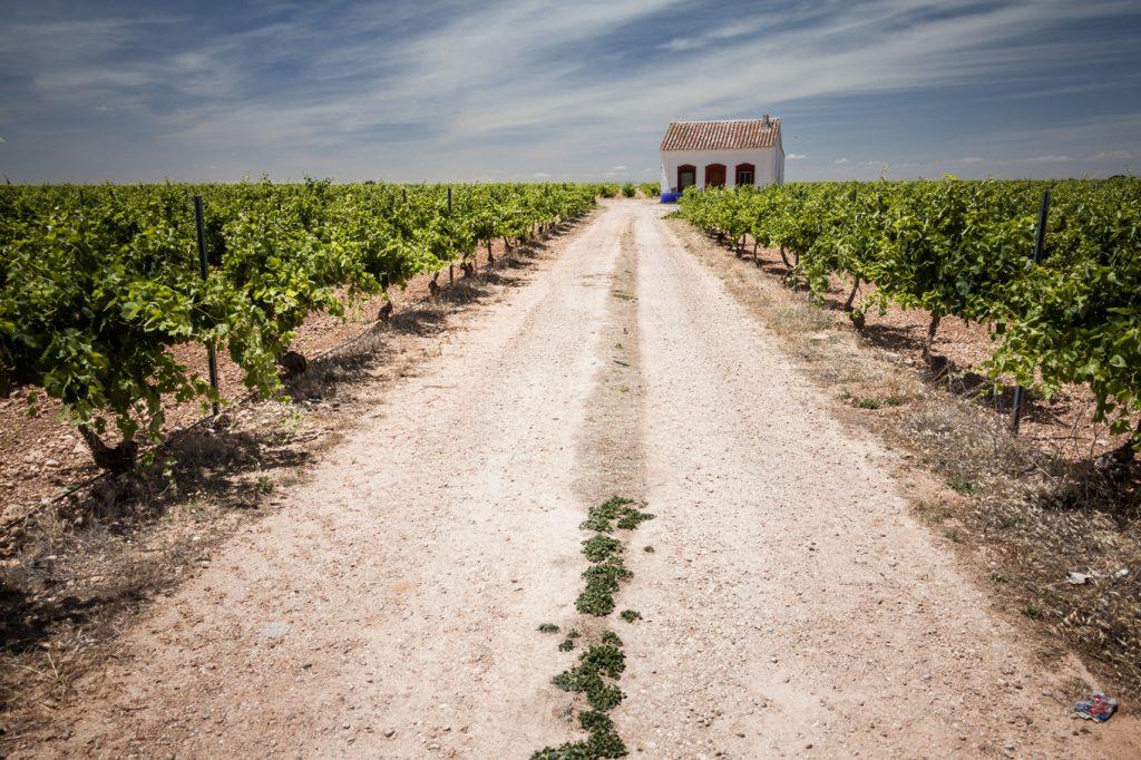 La Mancha, la región vitivinícola más extensa del mundo