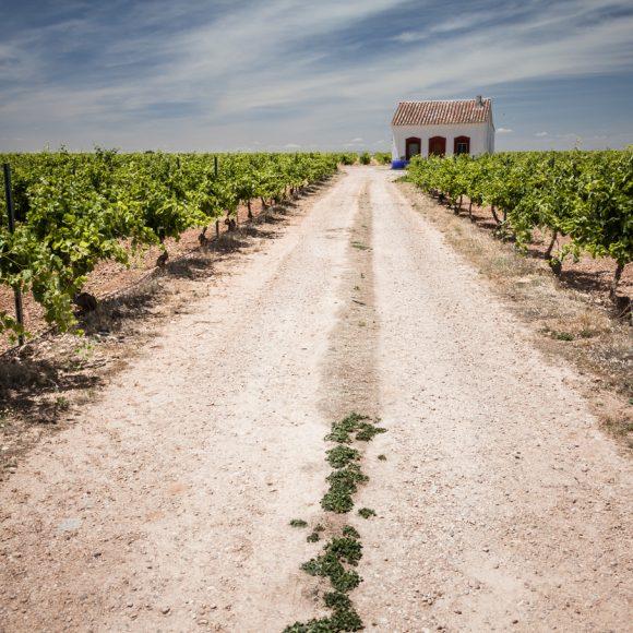 Protegido: La Mancha, la región vitivinícola más extensa del mundo