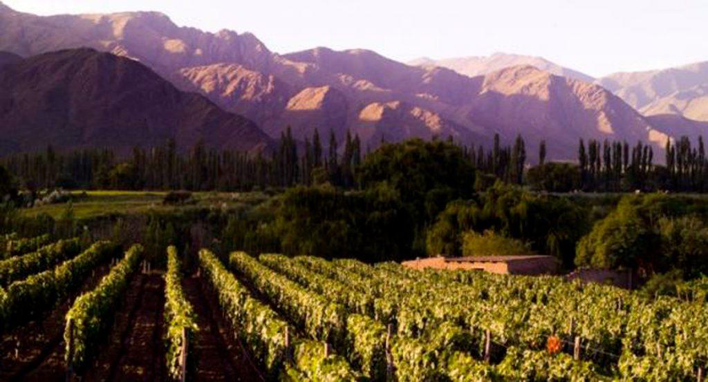 Argentina, vitivinicultura de altura