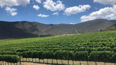 #WineTourPorParras – Siguiente parada: Don Leo 🍷✨