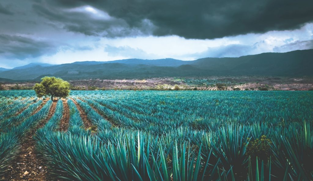 La bebida nacional de México como nunca la has visto