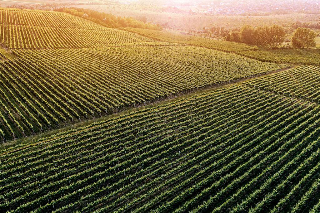 México, tierra de vinos