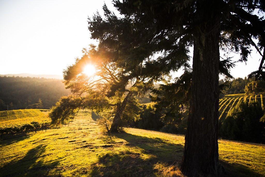 Cuatro etiquetas que muestran porqué Oregon es tierra interesante para el vino