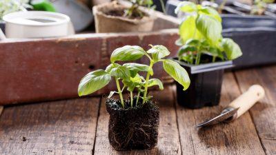 Cinco sencillos pasos para crear tu propio huerto en casa 🌿