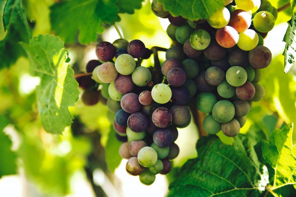 Descorche infalible: tres bodegas y ocho vinos para amar California 🍷