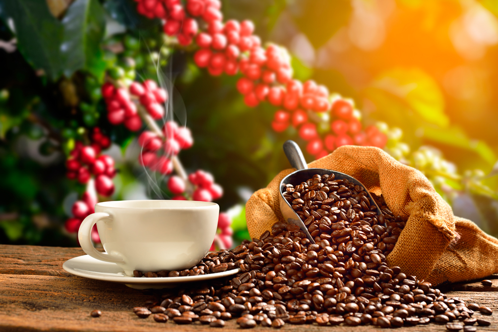Café encantador