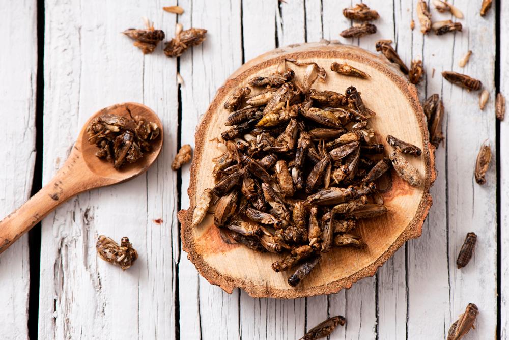 Aprende a cocinar insectos con Larousse Cocina