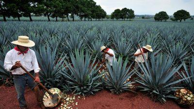 Nueva Zelanda reconocerá al tequila mexicano como marca registrada