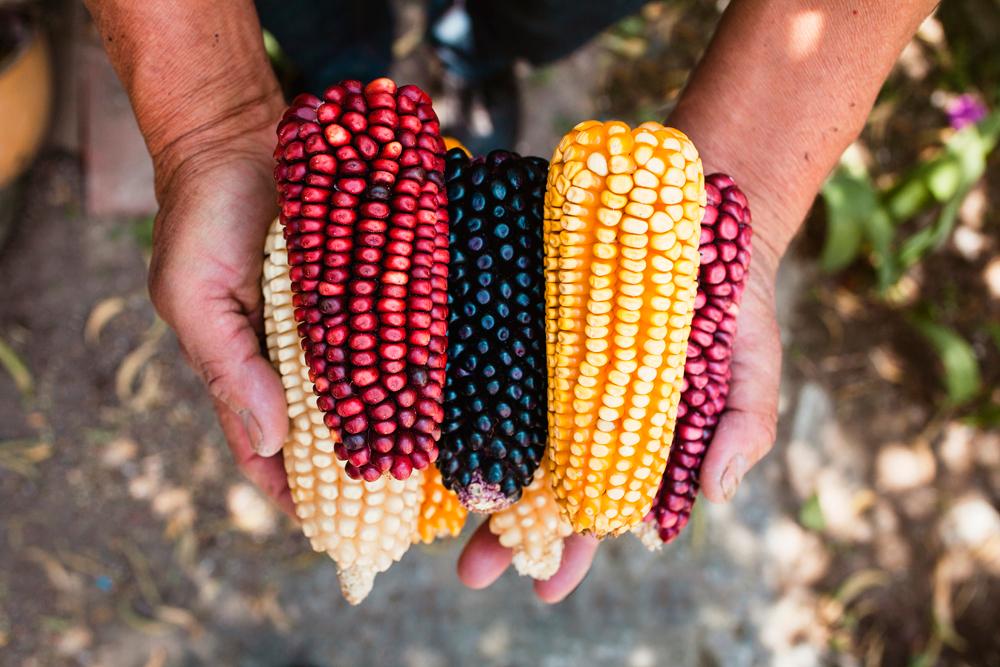 México está hecho de maíz 🌽