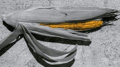 Ticuchi, interpretación oaxaqueña del maíz