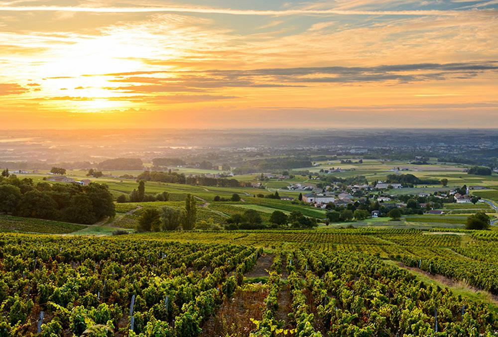 Sustentabilidad en el viñedo