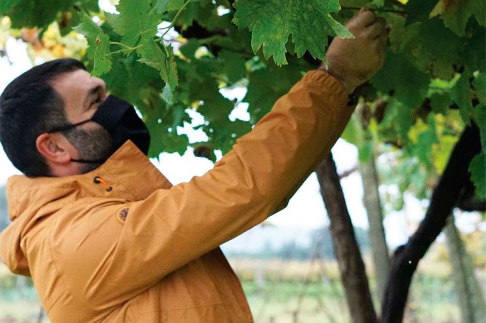 Vinho Verde, espectaculares vinos portugueses